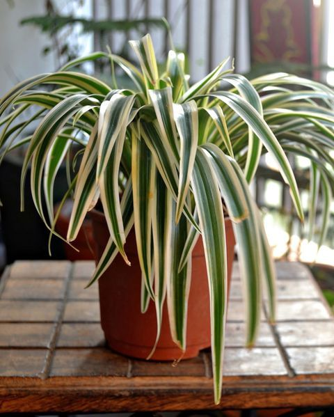 How To Water The 15 Most Popular Houseplants With Images