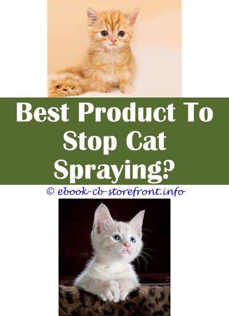 3c315a2dc34c61906faf4787b65e84b8 - How To Get Rid Of Cat Spray Smell Under House