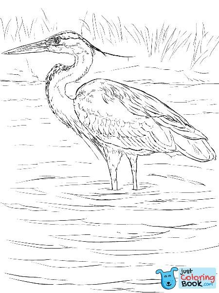 Great Blue Heron Stands In Wetland Coloring Page Free Printable With Regard To Black Crowned Night Heron Colo Bird Coloring Pages Bird Drawings Coloring Pages