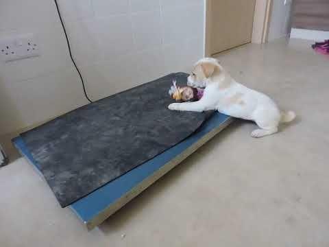 Scamp Ein Hund In Not Aus Dem Tierschutz Youtube Hunde In Not Hunde Tierschutz