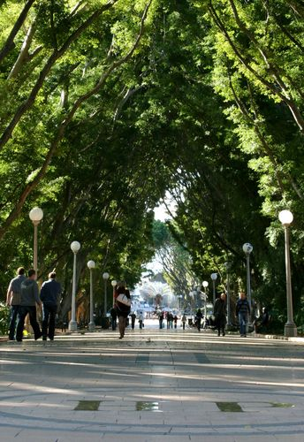 Hyde Park, Sydney Australia - one of the most beautiful parks I've ever been to.