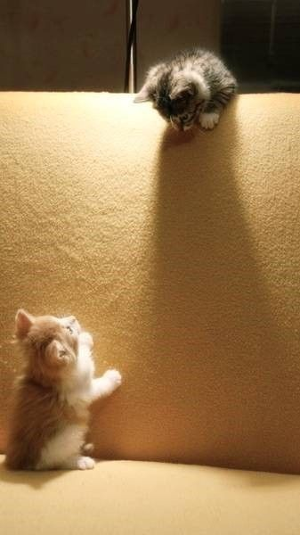 Comeon!! Jump Over Before We Get Caught!!