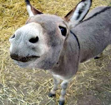 A donkey for my sis.