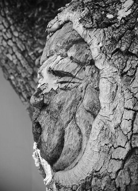дървесен дух на фредерика