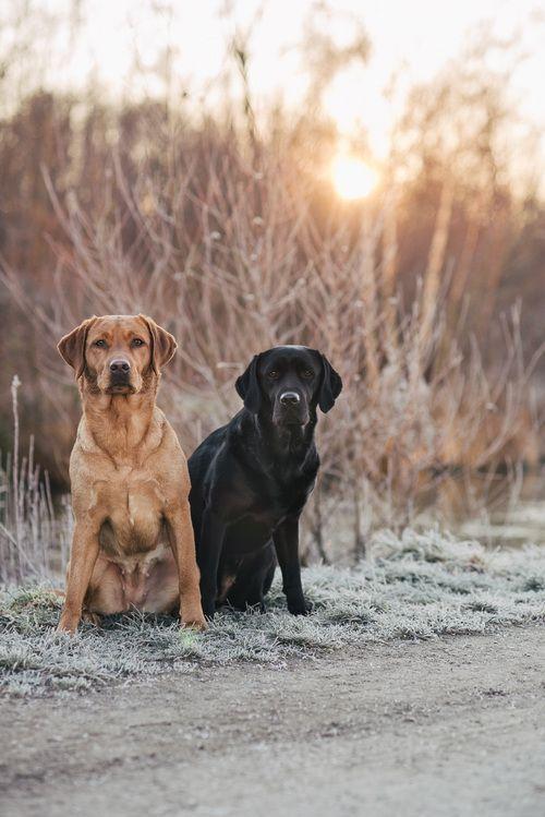 Nach Dem Regen Kommt Immer Die Sonne Hund Portraits Labrador Hund Und Hunde Fotos