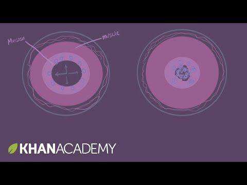 Asthma pathophysiology - YouTube