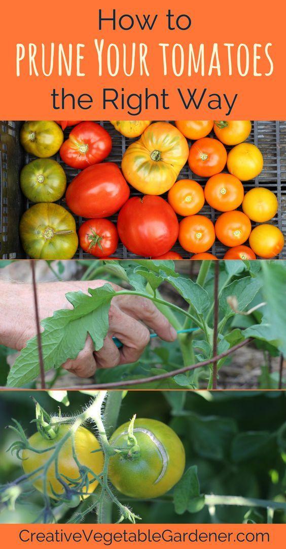 3c4196bc9ad2b069eead38eabb926b8e - Expert Gardener Organics Vegetable & Tomato Food