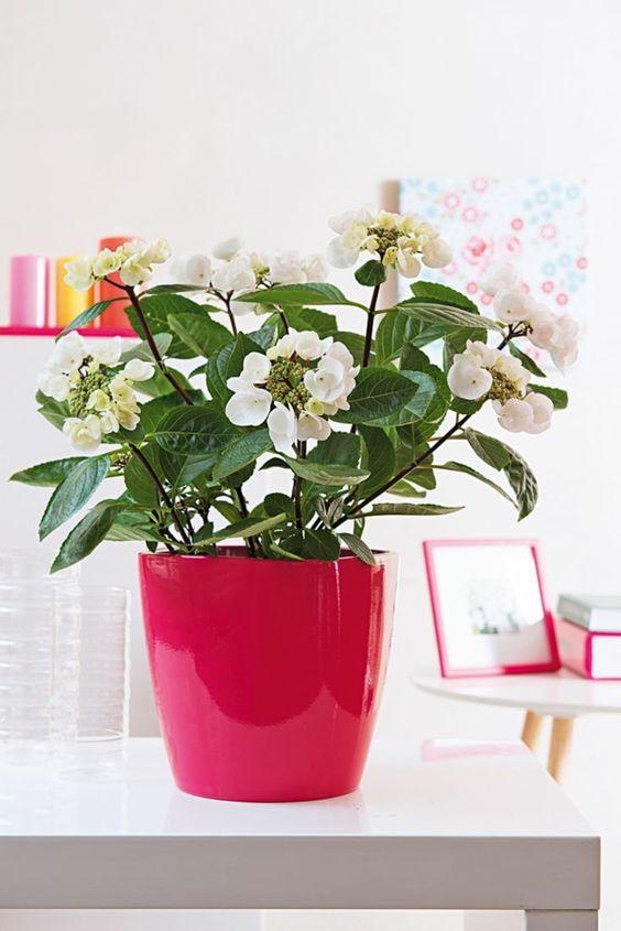 feng shui pflanzen und farben wohnideen | plantes | pinterest ... - Wohnideen Von Feng Shui