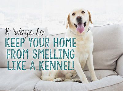 8 Ways To Keep Your Home From Smelling Like A Kennel A