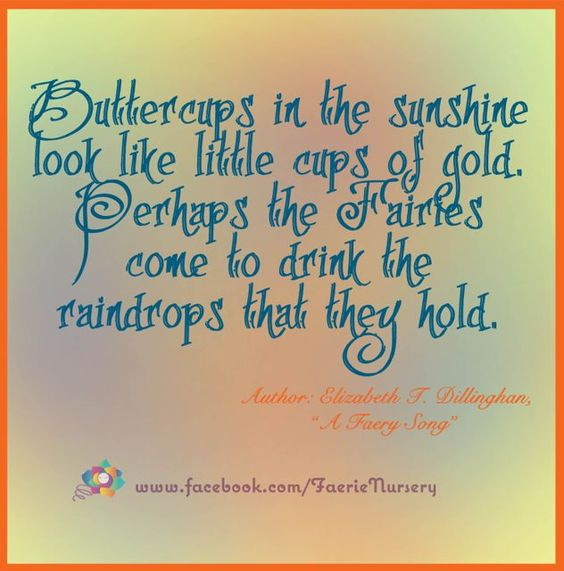 'Buttercups in the sunshine look like little cups of gold. Perhaps the Fairies come to drink the raindrops that they hold.'  Author: Elizabeth T. Dillinghan,  'A Faery Song'