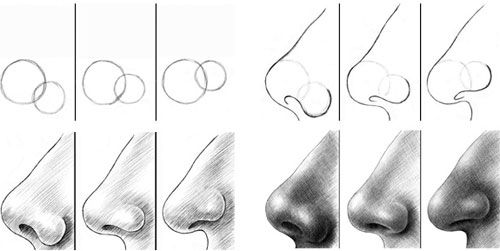 Side view of noses- Profile tutorial: