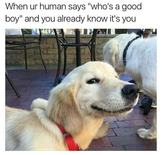 Who's a good boy? More