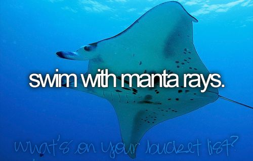 Swimming with Manta Rays is number one on my bucket list, truth.