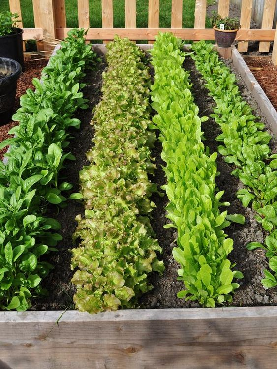 Gardens beautiful and raised beds on pinterest for Vegetable garden maintenance