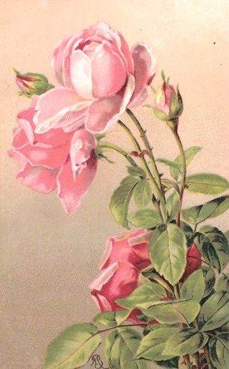 Pink Roses...ahhhhh.