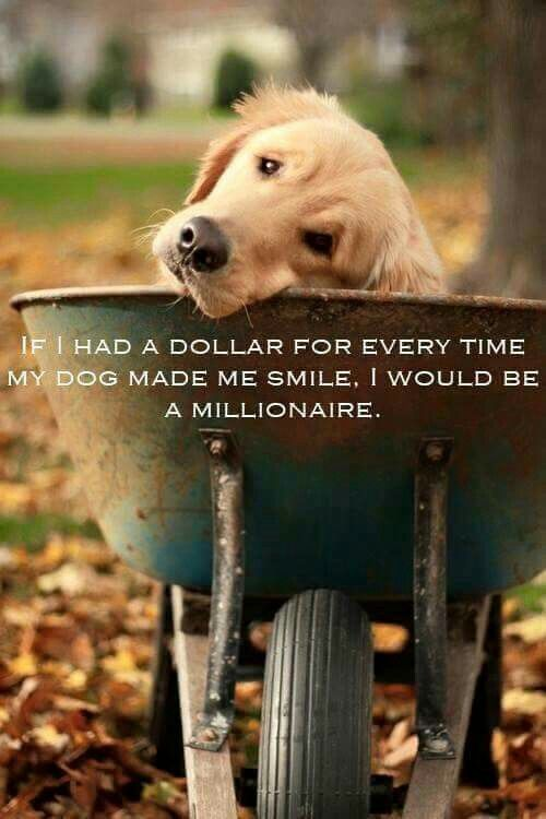 If I had a dollar for every time my dogs made me smile, I would be a millionaire.