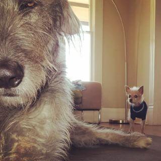 Die kleine Phyllis… | Diese Tiere zeigen dir, wie die perfekte Freundschaft aussieht