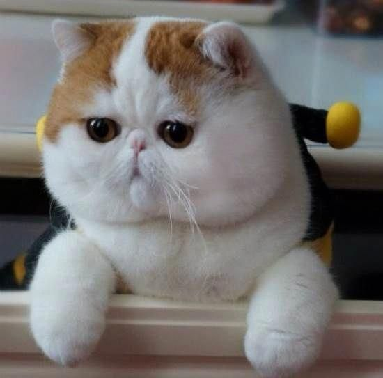 Come Here And Cuddle Me Snoopy Cat