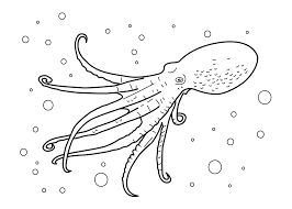 Coloring coloring pages and jellyfish on pinterest for Realistic octopus coloring page