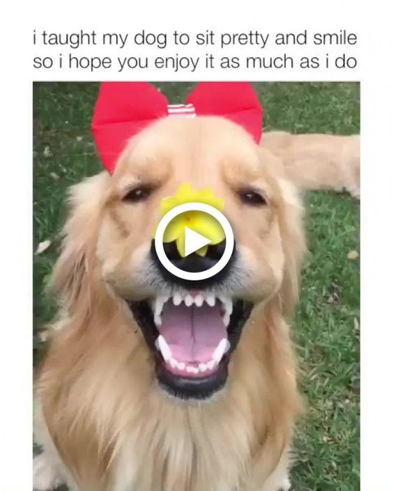 O sorriso de uma cachorro bonito feliz