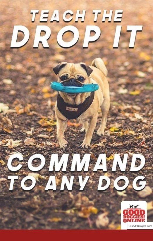 Dog Training Gloves Attack Dog Training Ultrasonic Sound Dog