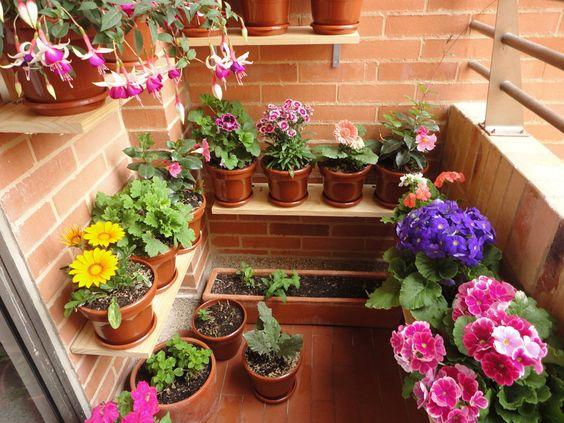 Te revelamos los secretos para que tus #plantas caseras estén hermosas todo el año.