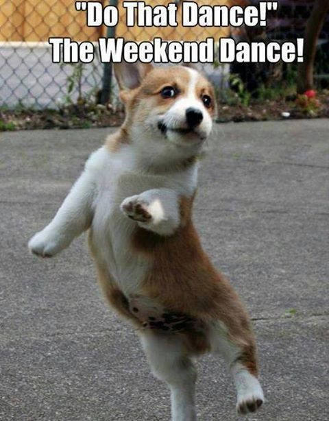 The Weekend Dance, have nice weekend! #dogs | Funny Pets ...