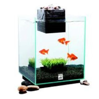 super cool feng shui fish tank things pinterest tanks fish tanks and feng shui. Black Bedroom Furniture Sets. Home Design Ideas