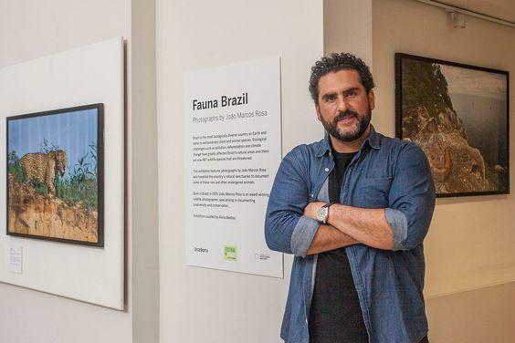 Exposição em Londres apresenta imagens da fauna brasileira