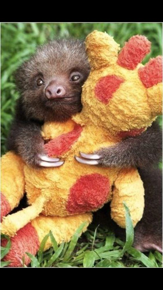 Oh you know...just a sloth cuddling with a stuffed giraffe!!!!