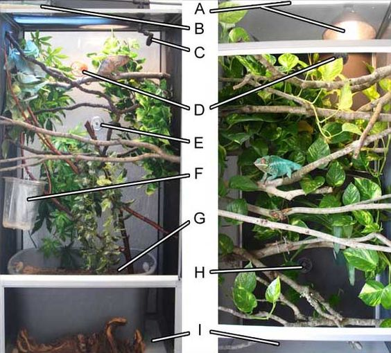 how to set up branches in a lizard enclosure