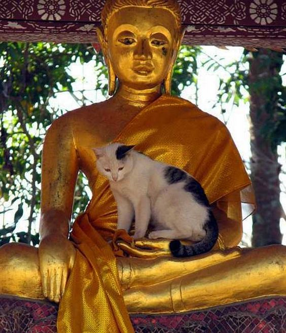 Neko Nirvana: Cat-Napping In The Lap Of Buddha - WebEcoist