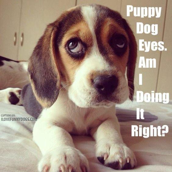***Puppy Dog Eyes