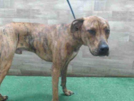 Orlando Fl Greyhound Meet Jax A Dog For Adoption Pets Kitten Adoption Dog Adoption