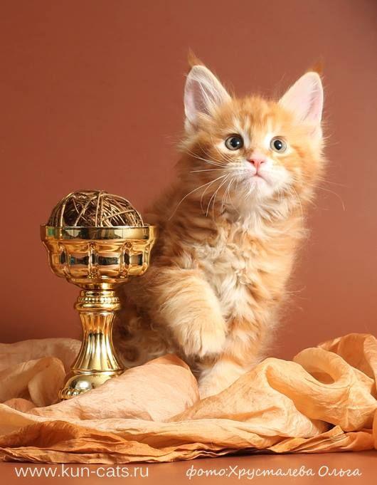 The Cutest Kitties S Photos The Cutest Kitties Facebook Pet Birds Cat Photo I Love Cats