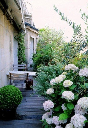 hortensias fleurs blanches terrasse fils terrasses terrasse haies ...