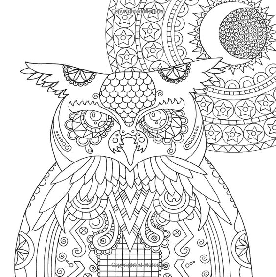 Wildlife Pet Owl Owls Coloring Pages Colouring Adult