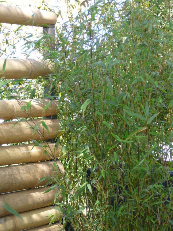 Vente de matériaux de construction en bambou (cabanes, clôtures,...)