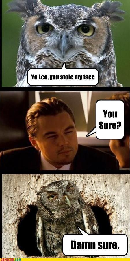 leo / owl