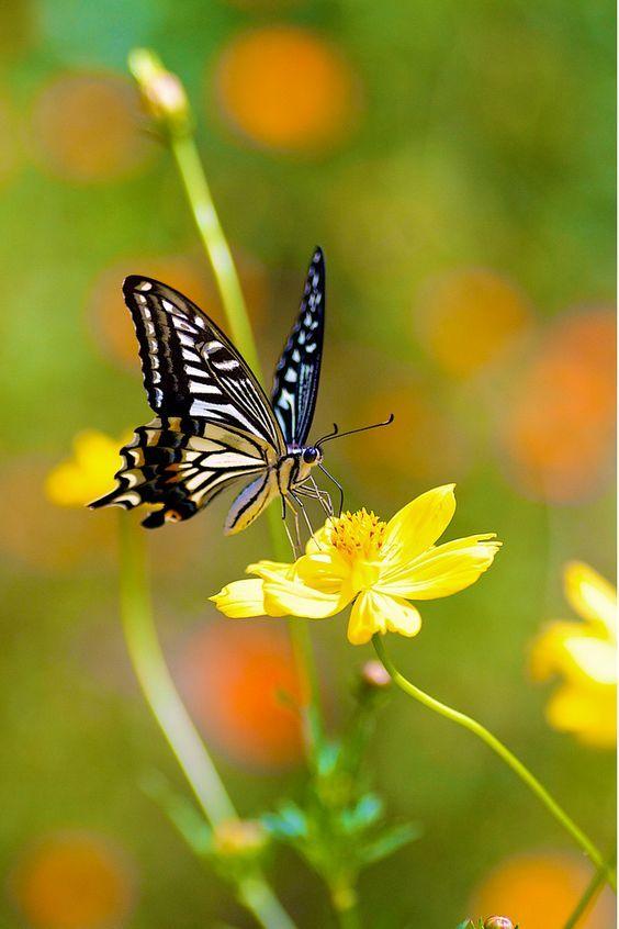 ผ เส อ ก บ ดอกไม Beautiful Butterflies Butterfly Pictures Butterfly Photos