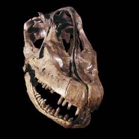 Hennings-photo.de-brachios3-mus-naturkde.jpg (283×283) - Brachiosaurus, Museum für Naturkunde Berlin. Dinosauria, Saurischia, Sauropodomorpha, Sauropoda, Macronaria, Brachiosauridae. Auteur : Lars Hennings, 2004.