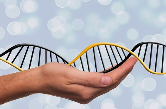 Heredity is a Major Factor in ADHD, Binge Eating and Alcoholism