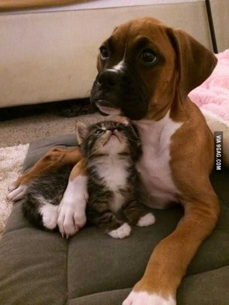 """""""Will you tell me a story tonight?"""" -Kitty , """"Yes."""" -Dog"""