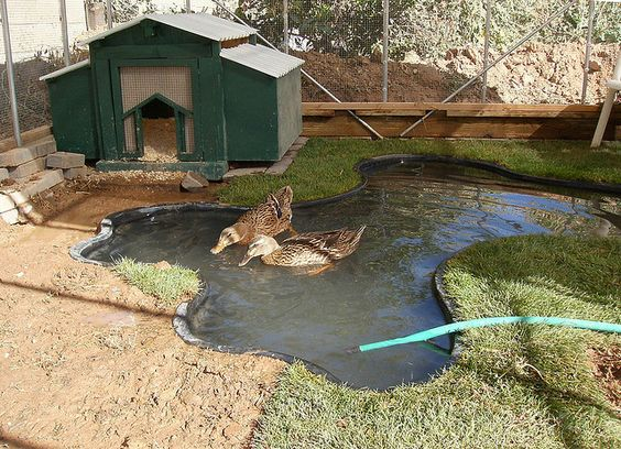 Duck enclosure ducks and ponds on pinterest for How to build a duck pen house
