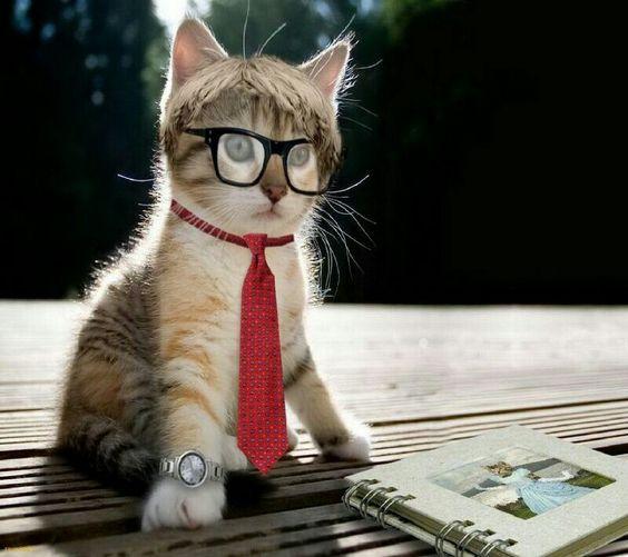 Intelligentes Kätzchen.