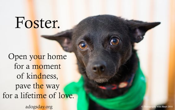 Dogs, foster, rescue, love.