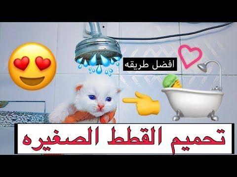 الطريقه الصحيحه لتحميم و تنظيف القطط بسرعه وسهوله الاعتناء بالقطط الصغيره Mohamed Vlog Youtube Hello