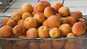 cultured apricot apricot fruit and more apricot fruit fruit leather ...