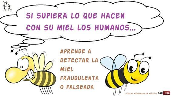Lo que no sabías de la miel, miel adulterada, como detectar la miel