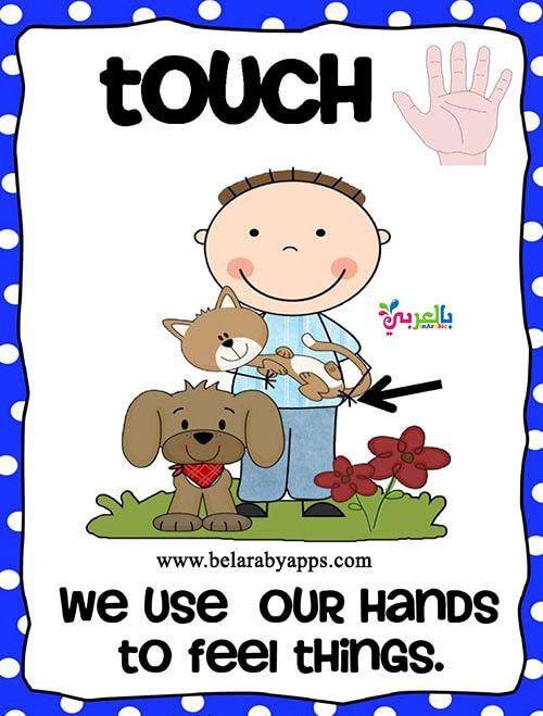 بطاقات تعليم الأطفال الحواس الخمس بالانجليزي وسيله تعليميه عن الحواس بالعربي نتعلم Coloring Sheets Feelings Color